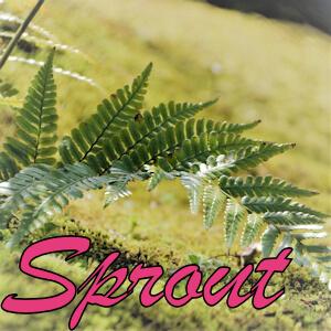【実践データ】リアル統計 – Sprout_EURJPY