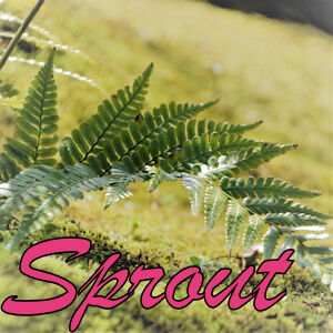 取引履歴 – Sprout